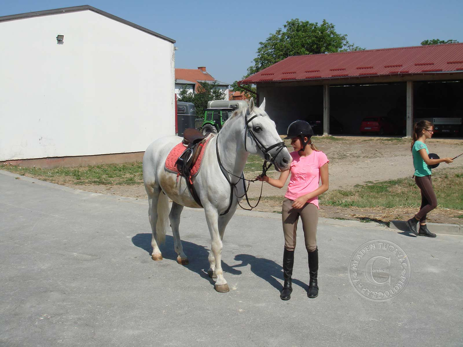 tour guide:Djakovo Lipizzan Farm